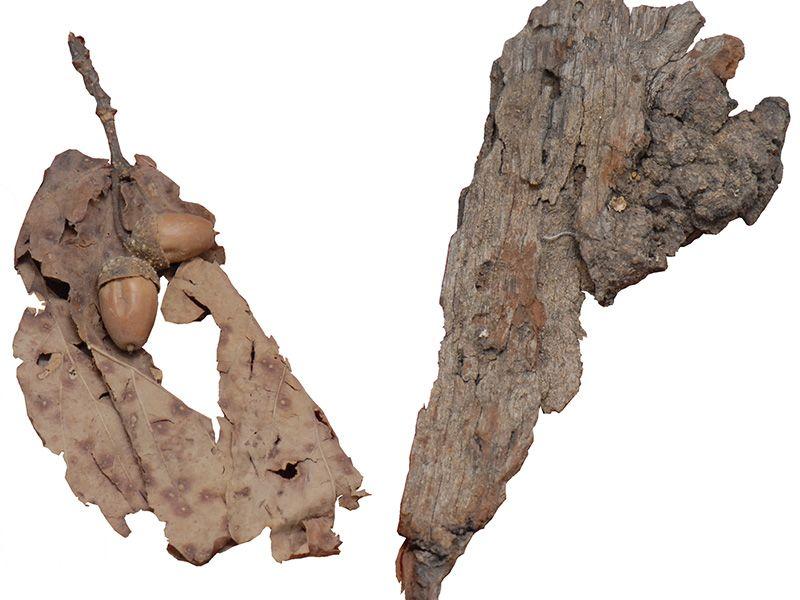 Кора, лист и жир Таковског грма