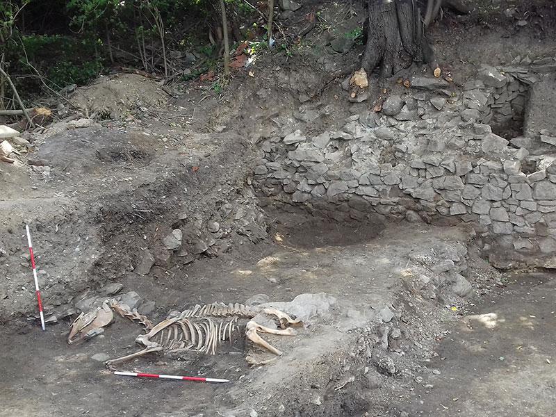 На локалитету Дрење-Којовача пронађен скелет коња